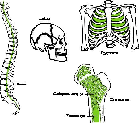 Састав кости