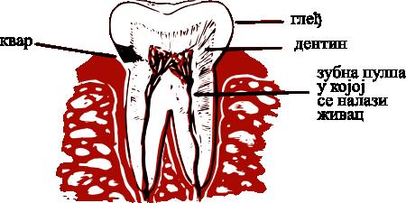 Пропадање зуба