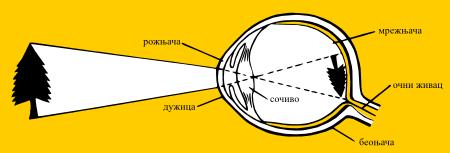 Грађа ока