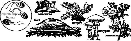 Како су постале биљке