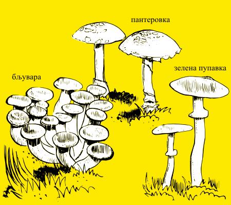 Отровне печурке