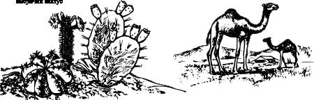 Биљке и животиње у пустињи