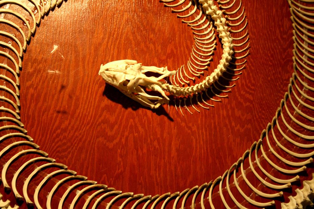 Скелет Анаконде (фото:  jenn d)