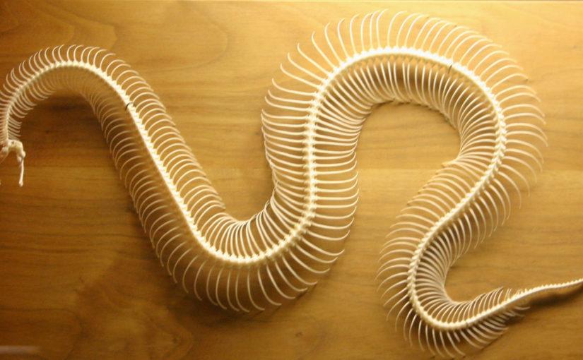 Snake Skeleton - Wikipedia