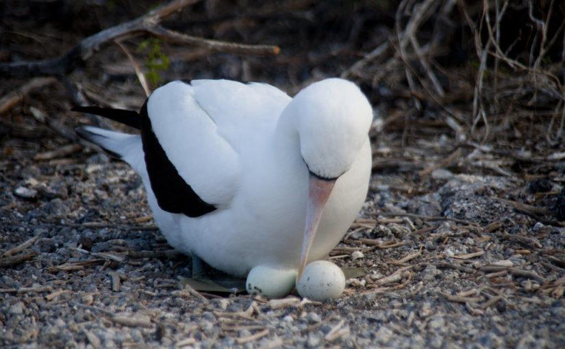 Која птица носи највећа јаја?