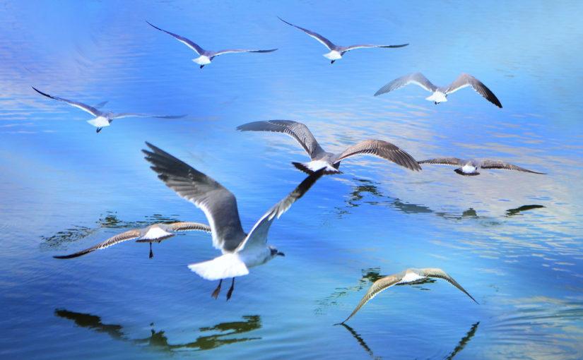 Зашто птице могу да лете?