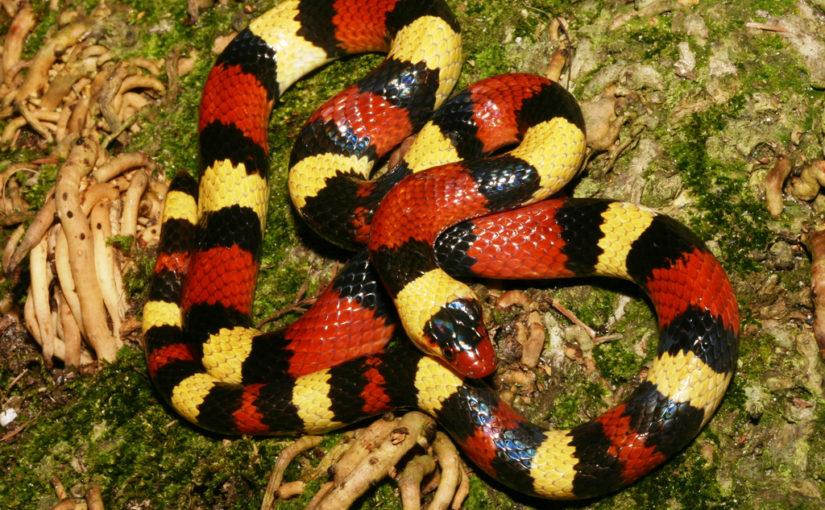 Која је змија најопаснија?